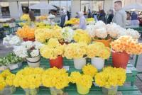 Centrāltirgū atsākusies aktīvā ziedu tirdzniecība