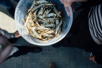 Tirgotājiem: Sākusies pieteikšanās Zivju svētku tirdziņam