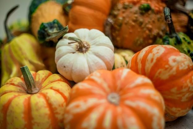 TIRGOTĀJIEM: Aicinām tirgotājus pieteikties Miķeļdienas tirdziņam 26.septembrī