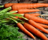 Daudzveidīgās saknes – alternatīva ierastajiem kartupeļiem