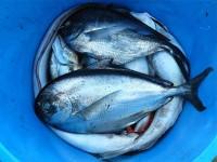 Продавцам: Началась запись на ярмарку праздника Рыбы