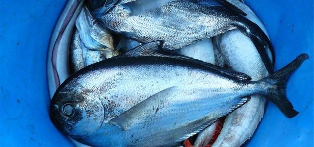 Приглашаем торговцев подавать заявки на участие в празднике моря и рыбы!